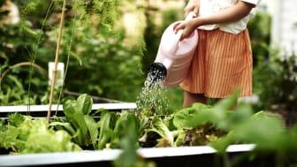 Plantagen toteutti tänä keväänä Suomessa toista kertaa yhteispohjoismaisen hankkeen lasten luontoinnostuksen herättämiseksi