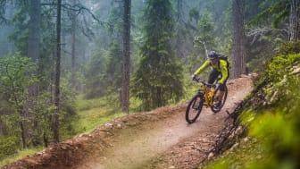 Fyra måsten för cykelfantasten – och resten av familjen