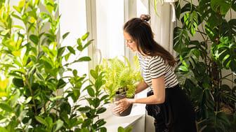 Pflanzenliebe mit LECHUZA