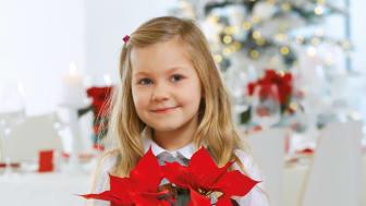 Lyckas med julstjärnor!