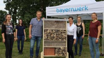 Aktionstag Bienenhotels