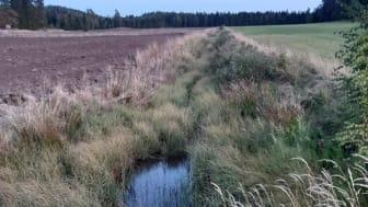 Permanent gräsbevuxet runt vattendrag skyddar vattnet och ger biologisk mångfald