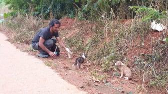 Streuner - wie hier an einem Straßenrand in Thailand - sind durch die Coronakrise zunehmend von Menschen entfremdet, was Tierschutzmaßnahmen erschwert. (Foto: Lanta Animal Welfare)