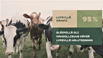 """Arla Suomi julkisti eläinten hyvinvointia seuraavan tekoälysovelluksen – """"Halusimme luoda maailman läpinäkyvimmän maidon syntymatkan"""""""