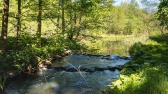 Das Löcknitztal im Seenland Oder-Spree ist das ideale Ziel für eine Frühlingswanderung (TMB-Fotoarchiv/Steffen Lehmann)
