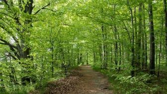 Se över dina hägn innan löven slår ut, uppmanar Skogsstyrelsen