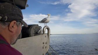 Delar av den svenska fiskeflottan har god lönsamhet och stark framtidstro, medan det småskaliga och kustnära fisket kämpar med dålig lönsamhet. Foto: Jakob Hydén
