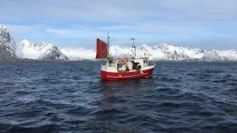 Skreifiske i Lofoten