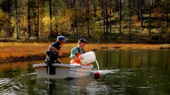 Sjön behandlas med läkemedel för att studera effekterna på abborrar. Foto: Micael Jonsson
