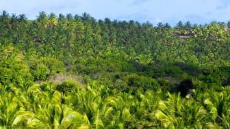2020 en milstolpe för SISPO - omställningen till certifierad palmolja går framåt