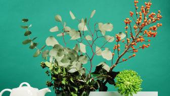 Grün ist im Trend: Sunny Day Herbal Green von Thomas.