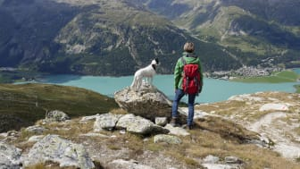 Hit drömmer hunden om att få resa_6