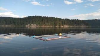 Slik ser det eksperimentelle oppsettet ut, utplassert i tre innsjøer i Sør-Norge (Foto: Eva Leu, Akvaplan-niva).