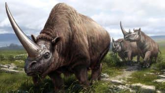 I förgrunden sibirisk enhörning (Elasmotherium sibiricum), bakom den två exemplar av Mercks noshörning (Stephanorhinus  kirchbergensis). I  bakgrunden en ullhårig noshörning (Coelodonta antiquitatis).  Illustration: Beth Zaiken
