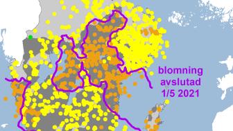blåsippa_2021.png