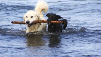Svalka gärna hunden med ett bad, men se till så den inte dricker för mycket vatten.