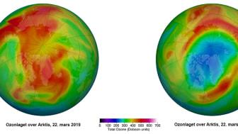 Ozonlaget over Arktis 22. mars 2019 versus ozonlaget over Arktis 22. mars 2020. Blå og lilla farge viser områder med lite ozon i atmosfæren, gul og rød farge angir områder med mer ozon.