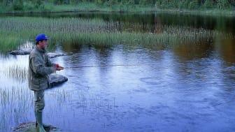 Fritidsfiske efter harr. Foto: Alf Linderheim / Naturfotograferna /IBL Bildbyrå