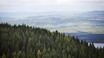 Visit Värmland lanserar en helt ny besöksnäringswebb