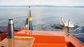 Foto: Johan Willner/imagebank.sweden.se
