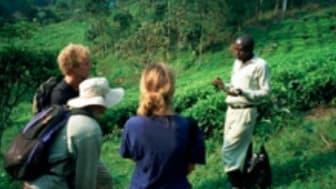 Unika skogsmiljöer kan bevaras med ekoturism