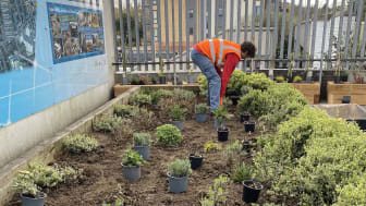 Partners in planting: Thameslink have engaged environmental charity Groundwork to make Elstree & Borehamwood station greener