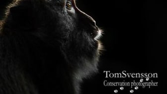 Toto: Tom Svensson
