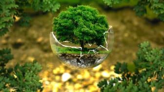 Våra FSC-certifierade träprodukter är en förnybar resurs som går att återanvända och återvinna. Bild: Pixbay