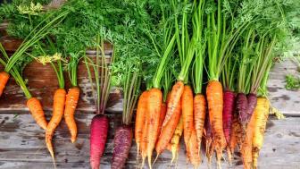 Det är slöseri med resurser att odla fram produkter som konsumenterna efterfrågar för att sedan tvingas sälja dem som foder. Foto: Pixabay.