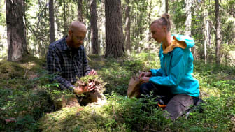Hur påverkar extrem torka våra skogar? Växtekologerna Kristoffer Hylander och Irena Koelmeijer forskar om hur extrem väderlek påverkar skogens biologiska mångfald. Foto: Stockholms universitet