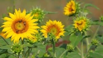 Tillåt många blommor blomma så vi har kvar småföretag som kan bidra till återhämtningen