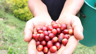 Is blockchain our missing link for a fairer, greener coffee trade?