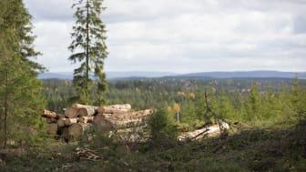 SM i skog arrangeras på SG/SödraViken