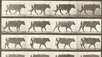 Lantbruksdjuren i konst och litteratur