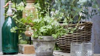 Att pyssla med växter och ägna sig åt trädgårdsarbete är bra för humöret, har en avstressande effekt och kan till och med få människor att känna sig mindre ensamma.