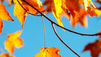 Snart är hösten här!