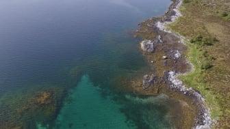 Vanlegvis når forskarar skal kartlegge fjøresona, går dei rundt og registrerer tang og tare manuelt. Men no, ytst mot havet på Søre Sunnmøre, freistar forskarane å ta bilete frå lufta ved hjelp av høgteknologiske dronar. (Foto: NIVA)