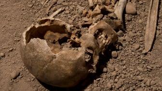 Skelett från man som kopplas till den skandinaviska stridsyxekulturen som uppstod för ungefär 5 000 år sedan. DNA från denna individ analyserades i studien. Foto: Jonas Karlsson, Östergötlands museum