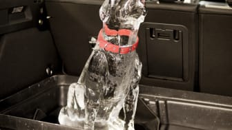 Ishund i varm bil