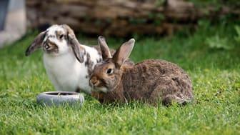 Ostern für Alle! So haben auch unsere Haustiere Spaß am Fest.