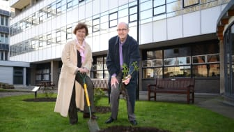 Modern slavery rose planting contributes to fight against UK slavery
