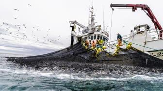 Ekstra støtte til Sjømatrådet i 2021
