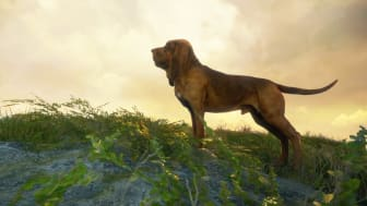Adopt a Clever New Approach to Hunting with the Bloodhound, the Newest DLC for theHunter: Call of the Wild