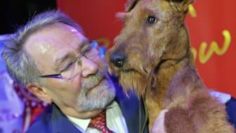 Finalen av Svenska Kennelklubbens internationella hundutställning avgjordes på söndagskvällen. Best in Show 2017 blev den irländska terriern Zinnia Of Gold Again från kennel Merrymac.