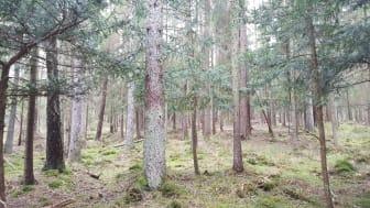 Idegran, Snappans naturreservat