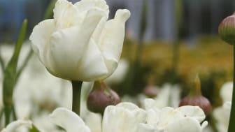 Vårutställning, skogsslinga, nyöppning av Orangeriet restaurang och vacker omgivning. Säsongsöppning 1 april.