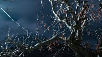 © Ioanna Sakellaraki, Greece, Student Shortlist, 2020 Sony World Photography Awards (2)