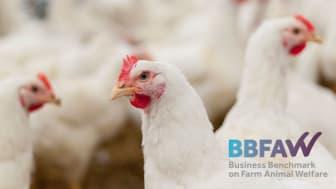 Nestlé sai tunnustusta eläinten hyvinvoinnin huomioimisesta tuotantoketjussaan