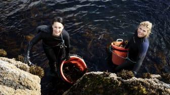 Lofoten Seaweed ist erstmal auf der Anuga vertreten und zeigt wie lecker Algen als Zutat und Gewürz sein können.
