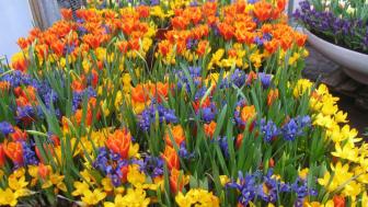 Pressinbjudan: Äntligen kommer våren till Helsingborg